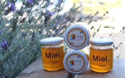 Première récolte de miel